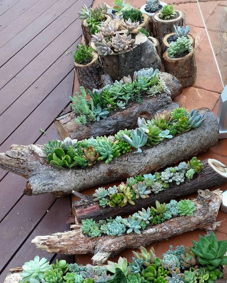 25 Best Ideas About Indoor Succulent Garden On Pinterest Indoor