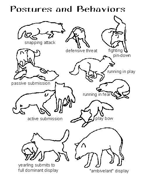 Mating Animals Drawing