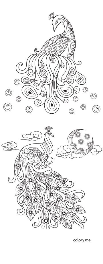 43 best images about Animal-Adult coloring pages on