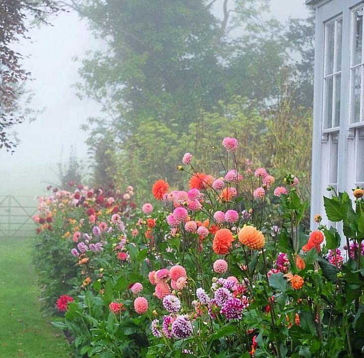 25 Best Ideas About Dahlias On Pinterest Dahlia Flowers Dahlia