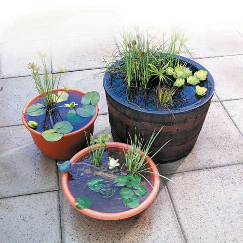 25 Best Ideas About Container Water Gardens On Pinterest