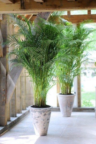 25 beste ideen over Planten op Pinterest  Cactus