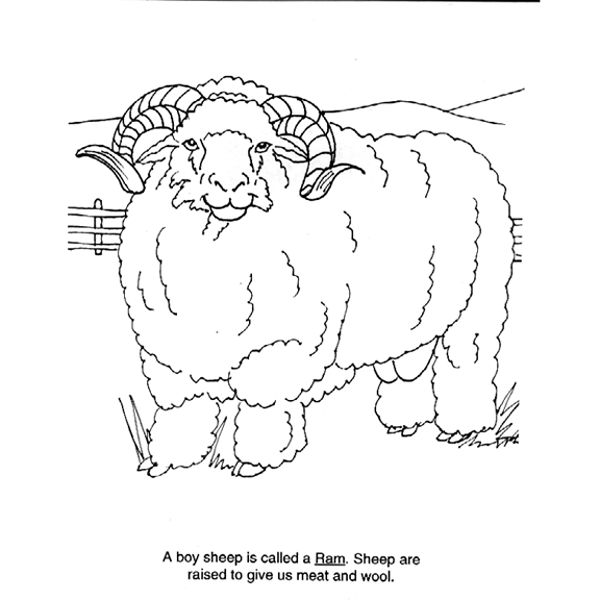 1000+ images about Wool in School on Pinterest
