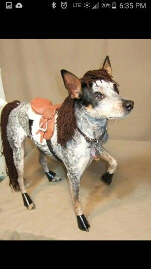 Terriers Costumes and Horses on Pinterest