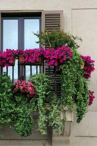 25+ best ideas about Balcony flowers on Pinterest ...