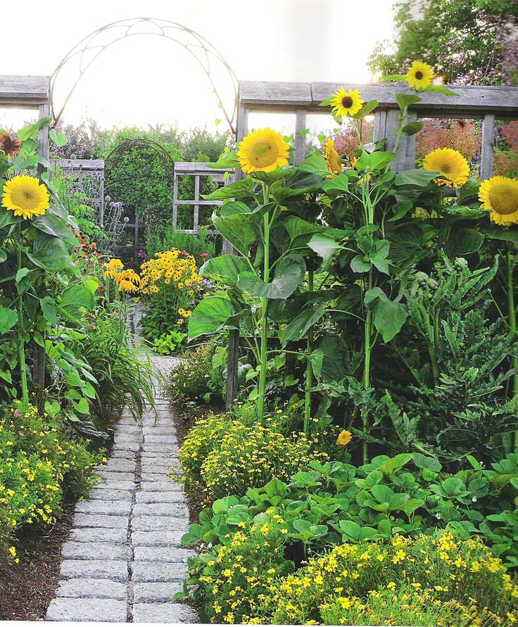 25 Best Ideas About Giant Sunflower On Pinterest Cut Flower