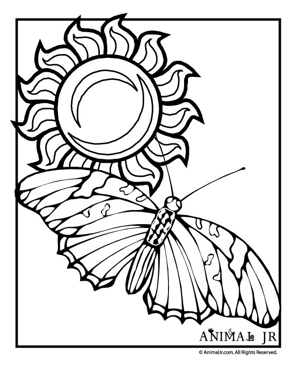 131 best images about Coloring Pages on Pinterest