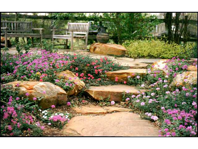 17 Best Images About Landscaping In Texas On Pinterest Drought