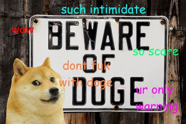 1000 images about much wow such doge very shibe on