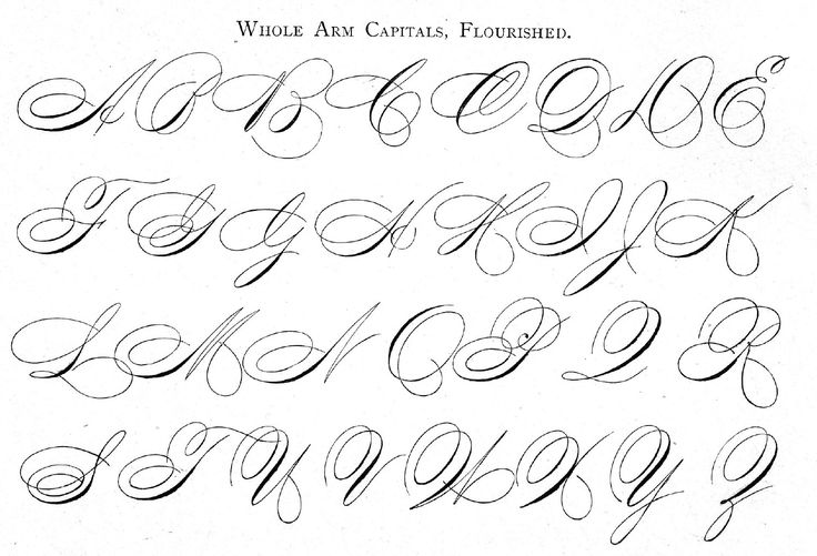 Whole Arm [Cursive] Capitals, Flourished, from Ames' Guide