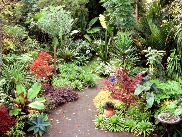527 Best Images About Tropical Gardening On Pinterest Tropical