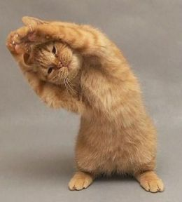 Image result for How to stand up on cat hind legs