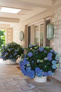25+ best ideas about Front Door Plants on Pinterest ...