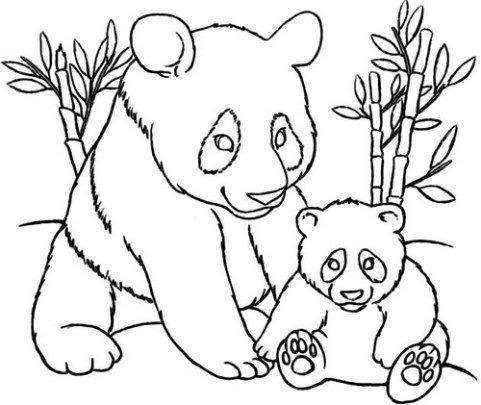 Best 25+ Dibujos De Osos Panda ideas on Pinterest