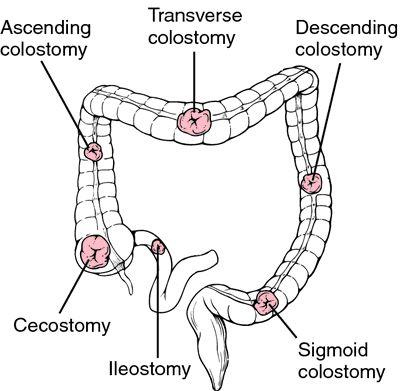 1090 best Anatomy/Medical Stuff images on Pinterest