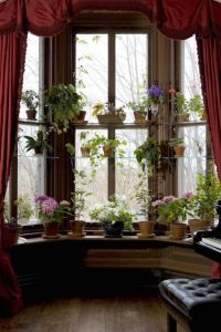 1000+ ideas about Plant Shelves on Pinterest   Small ...