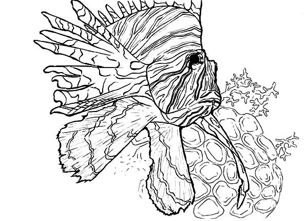256 best images about kids coloring pages on Pinterest