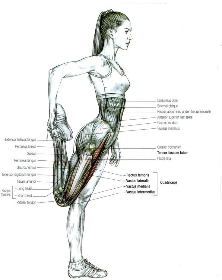90 best images about Anatomy & Physiology on Pinterest