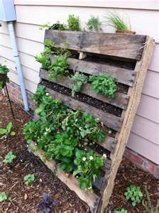33 Best Images About Great Vegetable Garden Ideas On Pinterest
