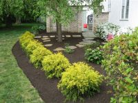 Golden Mop Threadleaf False Cypress - This droopy little ...