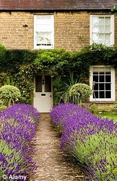 25 Best Ideas About Front Gardens On Pinterest Front Flower