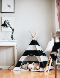 25+ best ideas about French bulldog puppies on Pinterest ...