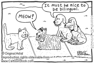 153 best images about Linguistic Humor on Pinterest
