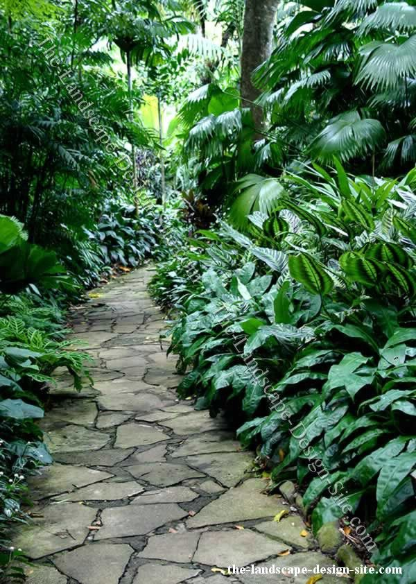 107 Best Images About Jungle Gardens On Pinterest Gardens