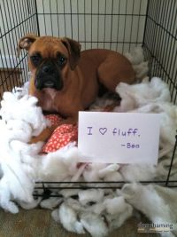 17 Best images about Boxer Shaming on Pinterest | Out 1 ...