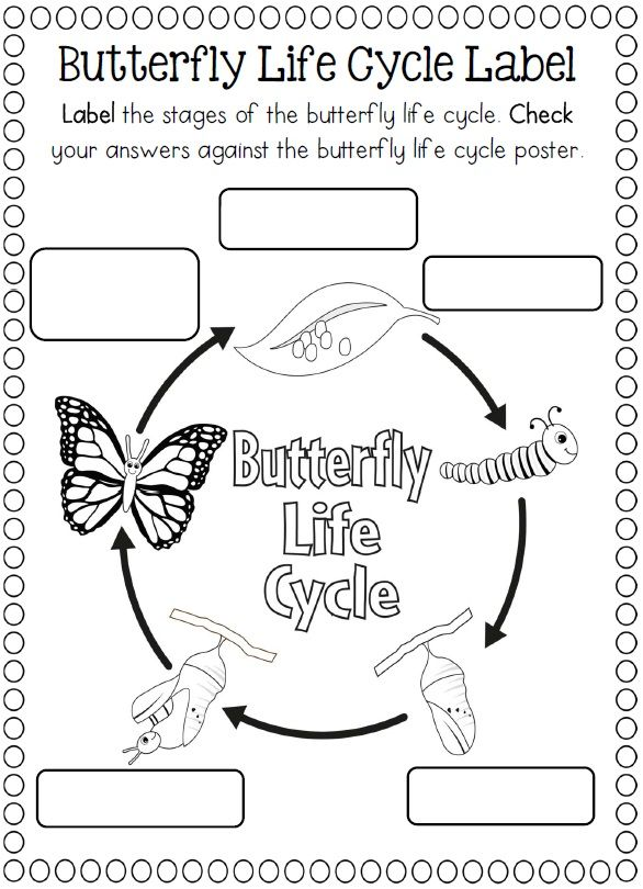 174 best images about Life Cycle Science Ideas on