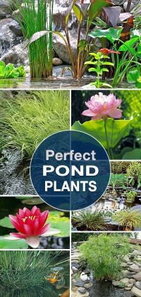 Best 25+ Pond landscaping ideas on Pinterest