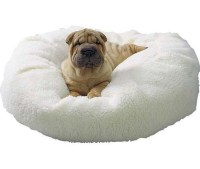 Make Your Dog Stop Sleeping in Your Bed | Them, On and Need to