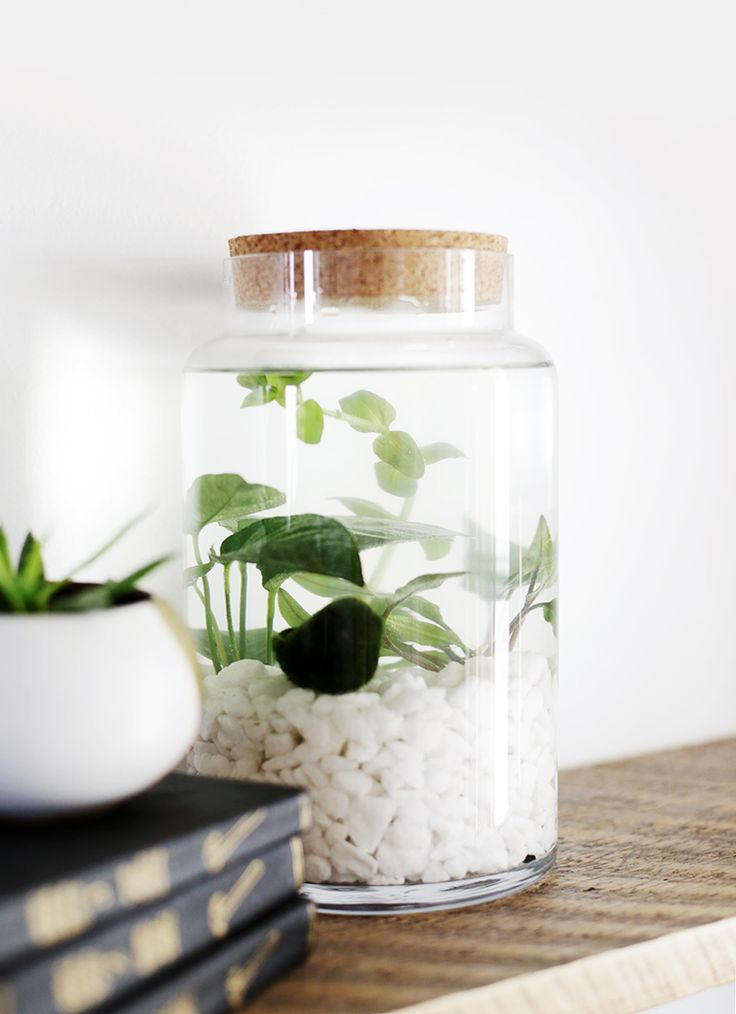 25 Best Ideas About Indoor Water Garden On Pinterest Water