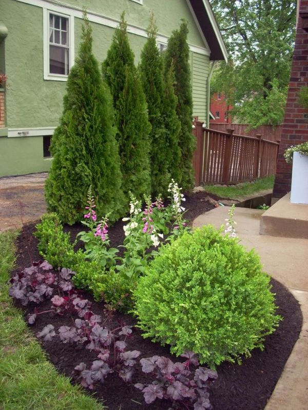 inexpensive landscape plants