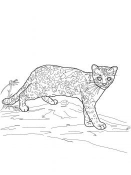 17 Best images about Animal Colouring Pages on Pinterest