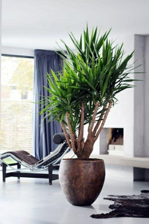 palmlilie yucca wohnzimmer liege pelzteppich  Pflanzen und Blumen  Pinterest  Html