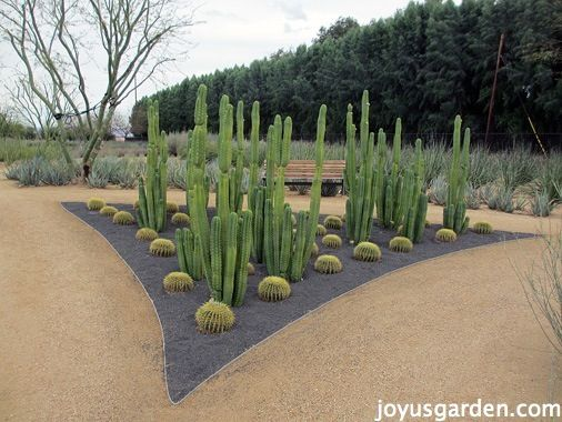 430 Best Images About Desert Landscaping Ideas On Pinterest