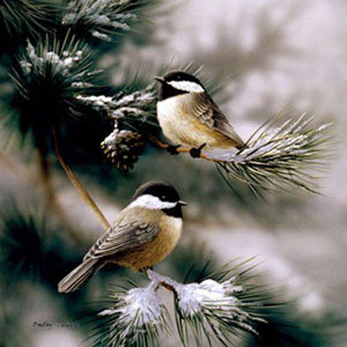 Chickadees N Snow by Bradley Jackson