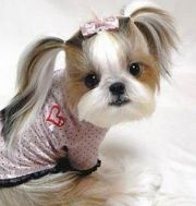 funny dog hairstyles