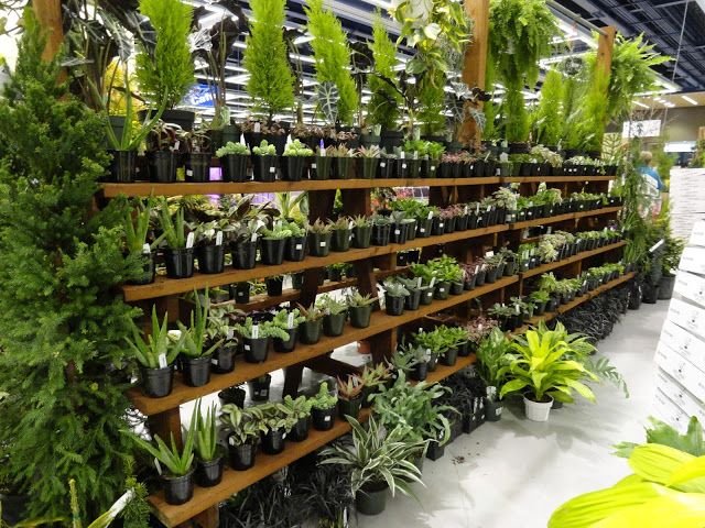 1474 Best Images About Garden Center Ideas On Pinterest Gardens