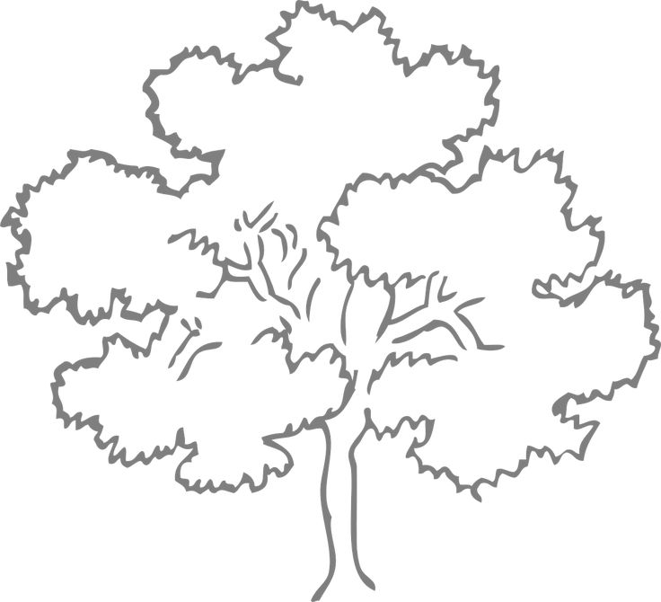 Free Vector Graphic Oak Tree Outline Nature Free Image On Pixabay