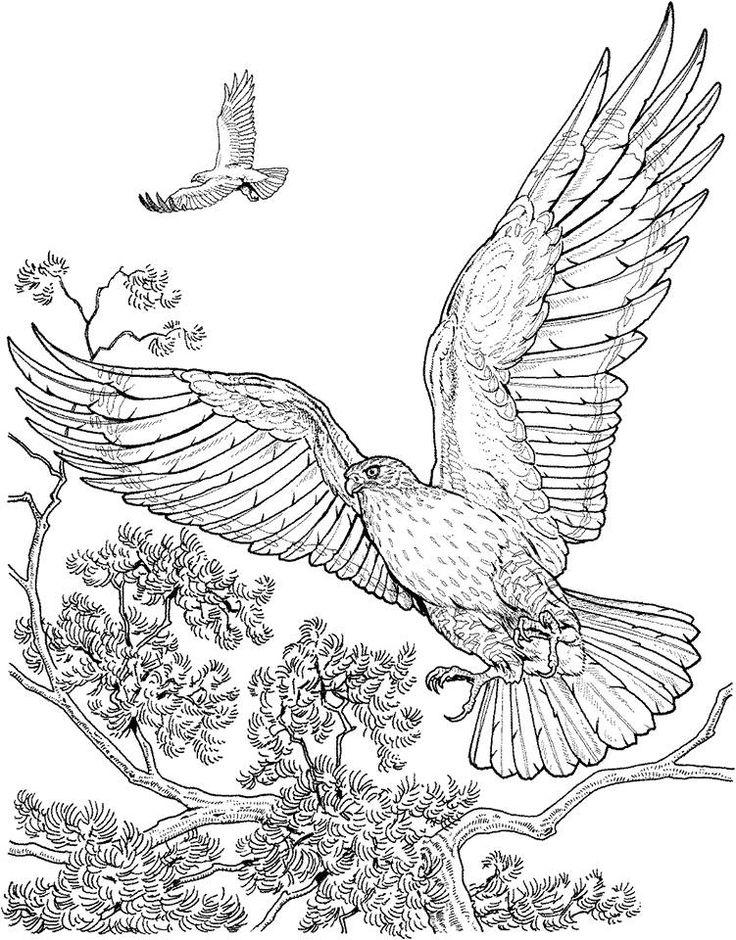 17 Best images about Coloriage d'oiseaux on Pinterest
