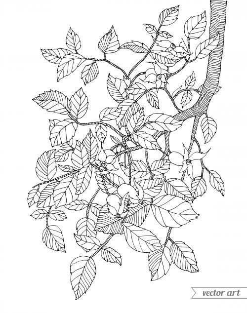 1000+ images about ♣Adult Colouring~Trees~Leaves