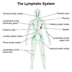 17 Best images about Non Hodgkin's Lymphoma on Pinterest