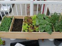 Apartment patio garden | Charlie gardening | Pinterest ...