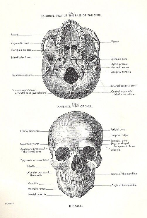1000+ images about Anatomy and physiology study help on