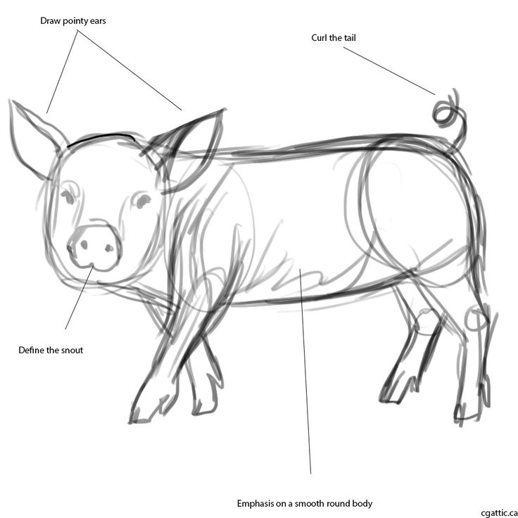 The 25+ best Pig drawing ideas on Pinterest