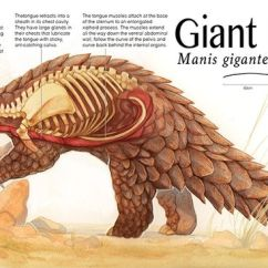 Coyote Skeleton Diagram Tp100 Wiring A Pangolin's Tongue Is Attached Near Its Pelvis And Last Pair Of Ribs, When Fully Extended ...