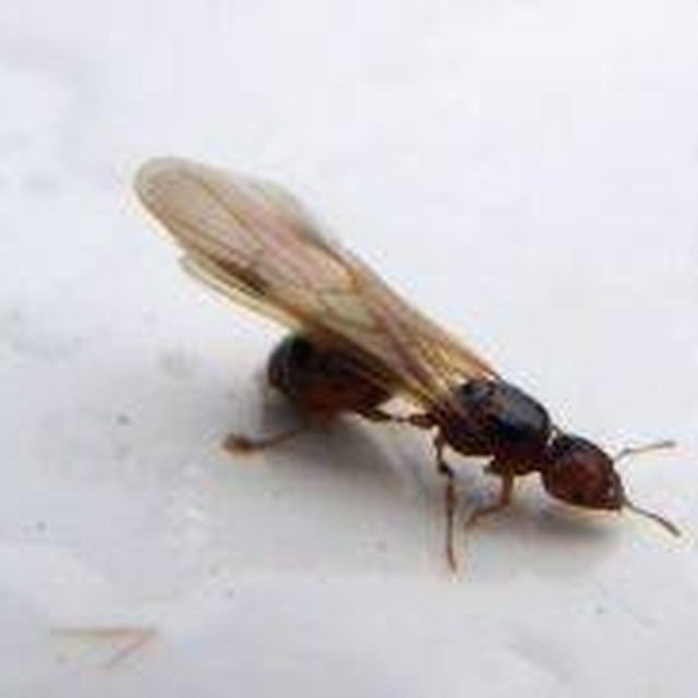25 best ideas about Flying Termites on Pinterest  Winged