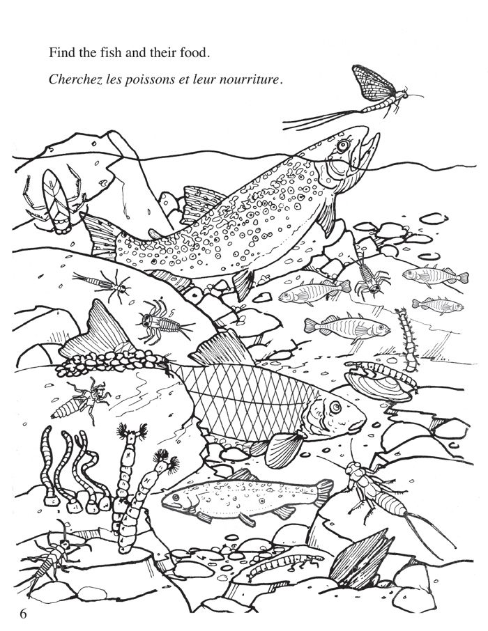 Freshwater Ecosystem Coloring Pages Coloring Pages